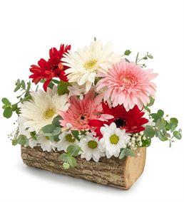 Nazionale Doğal Kütükte Kır Çiçekleri