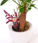Calcifer Serisi Ficus Bonsai Ağacı ve Uğur Böceği