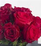 Calle Los Laureles Roses Flowers
