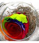 Cam Fanus Renkli Solmayan Gül