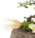Doğal Kütükte Bonsai Ağacı Aranjmanı