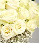 Genç ve Güzel 20 Beyaz Güller