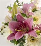 Helene Kutuda Pembe Beyaz Mevsim Çiçekleri