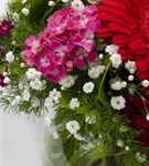 Love Beads Fanusta Çiçek Aranjmanı