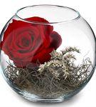 Love Kırmızı Solmayan Gül