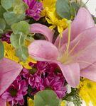 Midgard Kutuda Pembe Lilyum ve Sarı Papatyalar