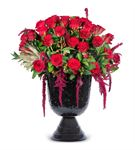 Mogliano Veneto Kırmızı Güller