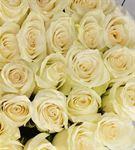 Mutluluğun Melodisi 20 Beyaz Güller