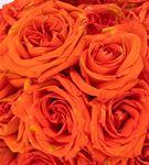 Orange Serisi Cam Fanusta Gül Tasarım