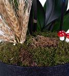 Osevio Serisi Kutuda Premium Mavi Orkide Tasarımı