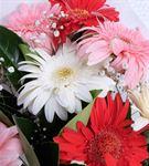 Renkli Gerberalar Çiçek Buketi
