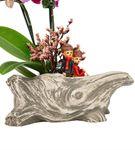 Rock Serisi Çift Dal Mini Orkide Tasarım
