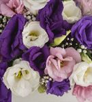 San Sebastian Flowers