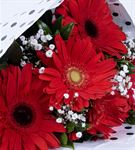 Sevgi Tutkusu 5 Kırmızı Gerbera Çiçek Buketi