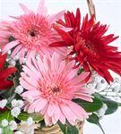Sevimli 2 Kırmızı 3 Pembe Gerbera Çiçek Sepeti