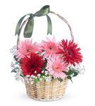 Sevimli 3 Kırmızı 2 Pembe Gerbera Çiçek Sepeti