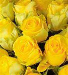 Sıcak Sevgi 50 Sarı Gül Buketi