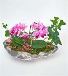 Stone Mini 2 Dal Mor Orkide ve Hedera