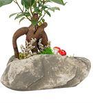 Stone Serisi Bonsai Tasarım