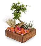 Tahta Kutuda Renkli Çiçeklerle Bonsai Çiçeği