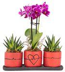 Trio Kalp Serisi Mini Orkide Ve Haworthia Tasarım
