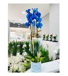 Vip Vazoda Mavi Orkide