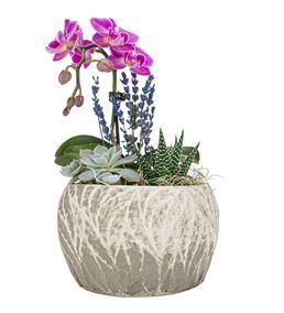Aging Serisi Mini Orkide ve Sukulent Tasarım Çiçek