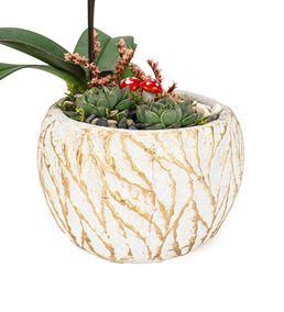 Aging Serisi Mini Orkide ve Sukulent Tasarım -Gold