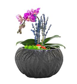 Aging Serisi Tek Dal Mini Orkide Tasarım