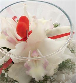 Akvaryum Vazoda Sürpriz Orkideler