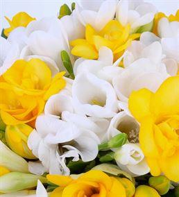 Bahar Enerjisi Mis Kokulu Frezyalar Çiçek Sepeti