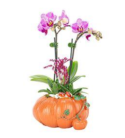 Bal Kabağı Mini Orkide Ve Sukulent Tasarım