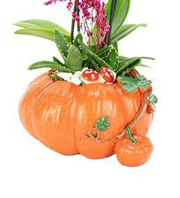 Bal Kabağı Mini Orkide ve Sukulent Tasarım Çiçek