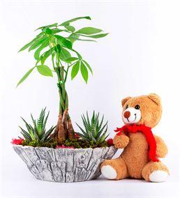 Bark Serisi Pachira(Para Ağacı Bonsai) Peluş Ayı