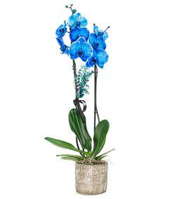 Billet Serisi 2 Dal Mavi Orkide Tasarım - Eskitme
