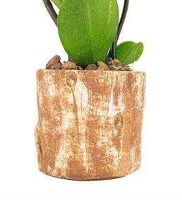 Billet Serisi 2 Dal Pembe Orkide Tasarım-Kahve