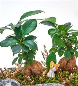 Bonsai Ormanında Küçük Dostlarla Gezinti