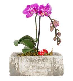 Book Serisi Tek Dal Mini Orkide Tasarım