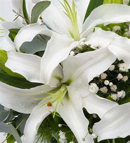 Bulutların Dansı Mis Kokulu Beyaz Lilyumlar