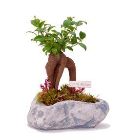 Canım Babam Mesajlı Mini Bonsai Saksı Çiçeği