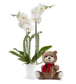Canım Sevgilim Ayıcıklı 2 Dal Orkide Çiçeği