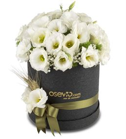 Cappella Sansevero White Flowers