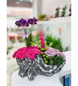 Dekoratif Saksıda Mini Orkide Ve Mini Güller