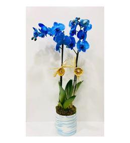 Dekoratif Vazoda Mavi Orkide