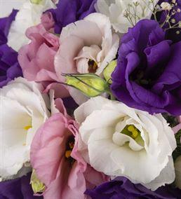Düş Sokağı Renkli Lisyantus Çiçeği