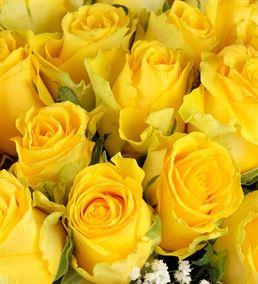 Eşsiz Sunum 50 Sarı Güller