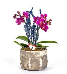 Face Serisi Mini Orkide Tasarım
