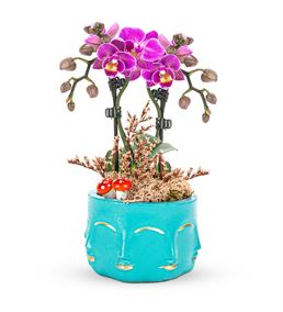 Face Serisi 2 Dal Mini Orkide Tasarım - Turkuaz