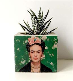 Frida Baskılı Beton Saksıda Sukulent