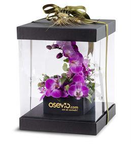 Garbatella Kutuda Mor Orkideler